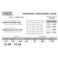 HARMON AMPLIFIED H003