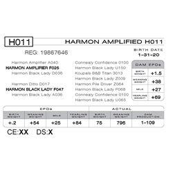 HARMON AMPLIFIED H011
