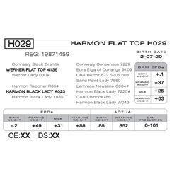 HARMON FLAT TOP H029