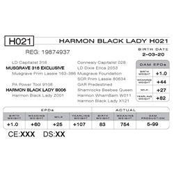 HARMON BLACK LADY H021