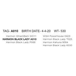 HARMON BLACK LADY A010