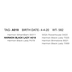 HARMON BLACK LADY A018