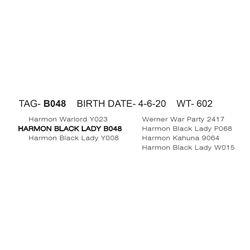HARMON BLACK LADY B048