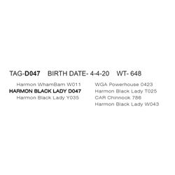 HARMON BLACK LADY D047