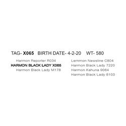 HARMON BLACK LADY X065