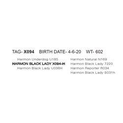 HARMON BLACK LADY X094- H