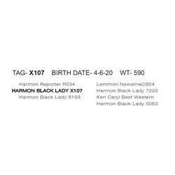 HARMON BLACK LADY X107