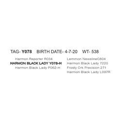 HARMON BLACK LADY Y078- H