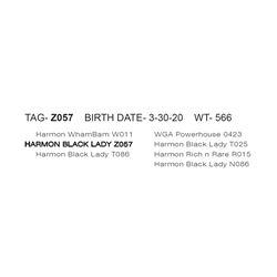 HARMON BLACK LADY Z057