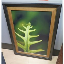 Framed Photographic Print - Fern
