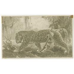 Banque Du Congo Belge, ca.1941 to 1952 Proof Vignette of Leopard.