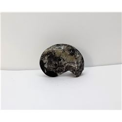 25)  NATURAL BLACK ORTHOCERAS AMMONITE