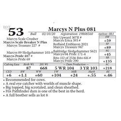 Marcys N Plus 081