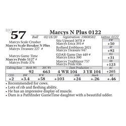 Marcys N Plus 0122