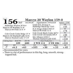 Marcys 20 Waylon 159-0