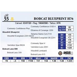 Bobcat Blueprint H76