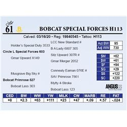 Bobcat Special Forces H113