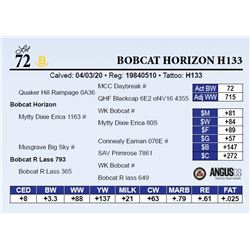Bobcat Horizon H133