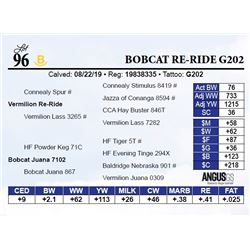 Bobcat Re-Ride G202