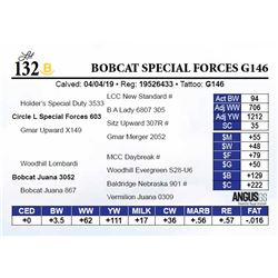 Bobcat Special Forces G146