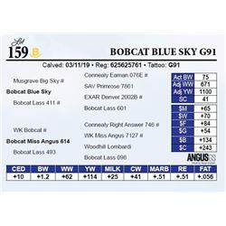 Bobcat Blue Sky G91