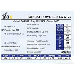 Bobcat Powder Keg G175