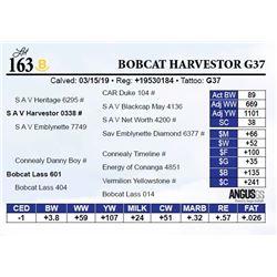 Bobcat Harvestor G37