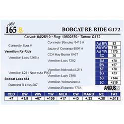 Bobcat Re-Ride G172