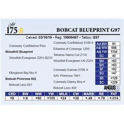 Bobcat Blueprint G97
