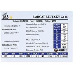 Bobcat Blue Sky G115