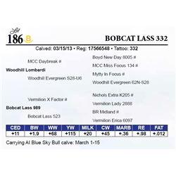 Bobcat Lass 332