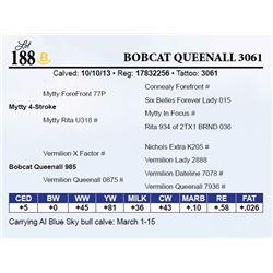 Bobcat Queenall 3061