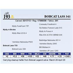 Bobcat Lass 341