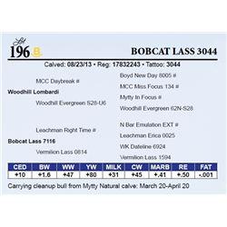 Bobcat Lass 3044