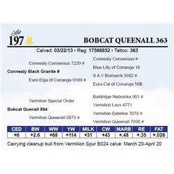 Bobcat Queenall 363