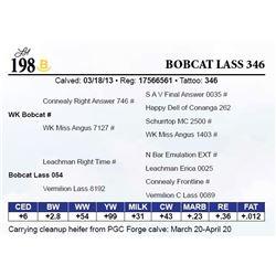 Bobcat Lass 346