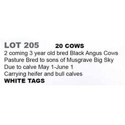 20 COWS