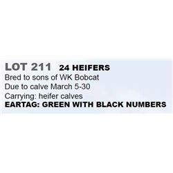 24 HEIFERS