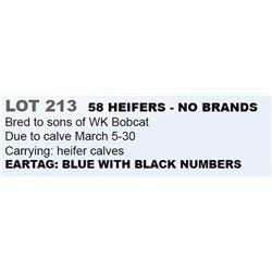 58 HEIFERS - NO BRANDS
