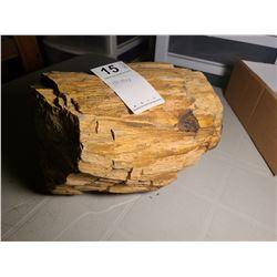 Petrified Wood Cat A