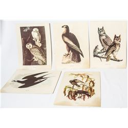 Collectible - Vintage Audubon Prints