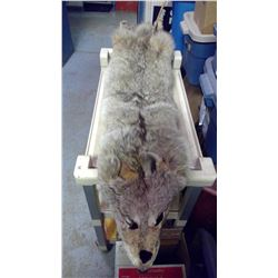 "Coyote Pelt (approx. 55"" Long)"