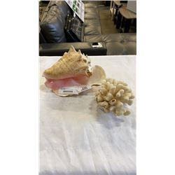 CONCH SHELL AND PIECE OF CORAL