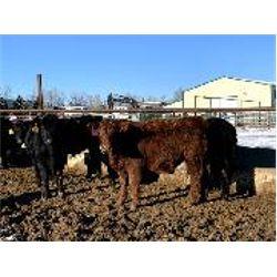WA Ranches at the University of Calgary