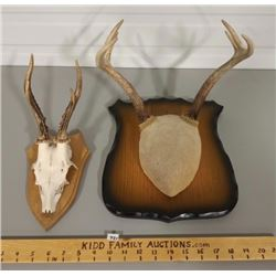 2 SETS MOUNTED ANTLERS