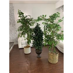 """Artificial Plants 55"""" to 72"""" H"""