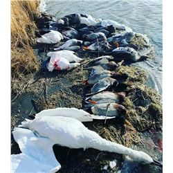 North Dakota Duck & Goose Hunt for 2