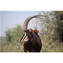 Restless Africa Safaris 7-Day Plains Game Hunt for 4 hunters and 4 non-hunting companions