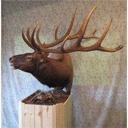 Shoulder Mount for Elk/Kudu Sized Animal from Natures Own Wildlife Studios