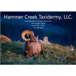 Life-size Taxidermy Mount by Hammer Creek Taxidermy